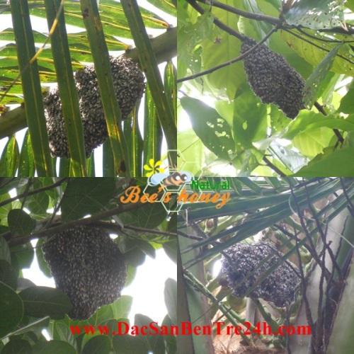 Mật ong ruồi, công dụng của mật ong ruồi, mật ong ruồi nguyên chất, mật ong ruồi cho sức khỏe, mật ong ruồi cho làm đẹp, mua mật ong ruồi nguyên chất ở đâu, mật ong ruồi chữa bệnh, Mat ong,28